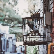 Vogelvrij in je eigen huis