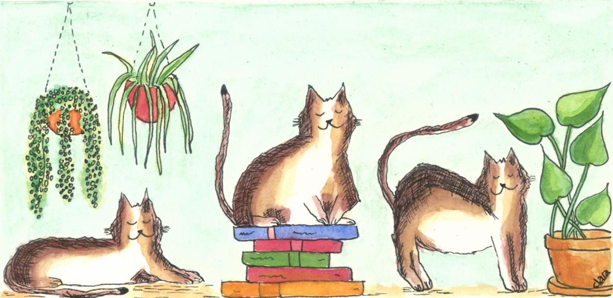 Mensenkatmens. Wat een mens van een kat kan leren